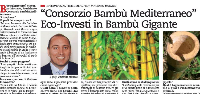 articolo giornale coltivazione bambu